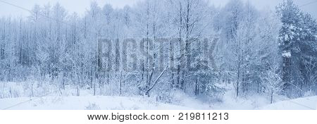 thickets in a winter forest. Trees and bushes covered with snow