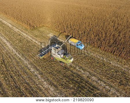 Fields next to Krasnodar, Russia - September 15, 2017: Combine harvester pours corn grain into the truck body. Harvester harvests corn. Collect corn cobs with the help of a combine harvester. Ripe corn on the field