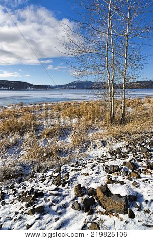 A barren tree stands by a frozen lake in north Idaho.