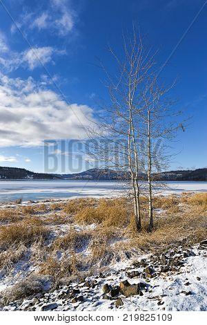 Barren tree by frozen lake in winter in north Idaho.