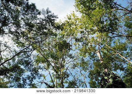 The Green Forrest Make You Feel Fresh