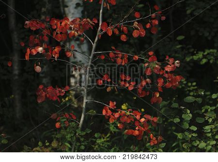Red and Orange Autumn Leaves Background in a dark color