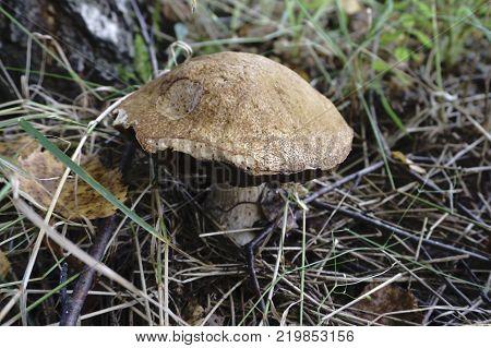 Mushrooms toadstools inin the petals  nature  in the petals