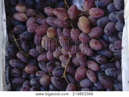 Red wine grapes background dark grapes blue grapes wine grapes