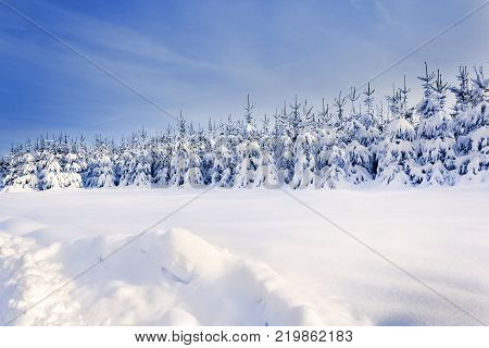 Winter landscape with trees covered by snow