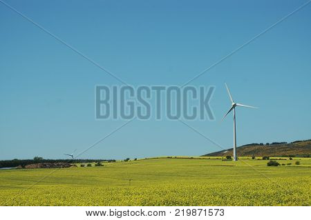 Wind Turbine and field of oilseed rape near Strichen, Aberdeenshire