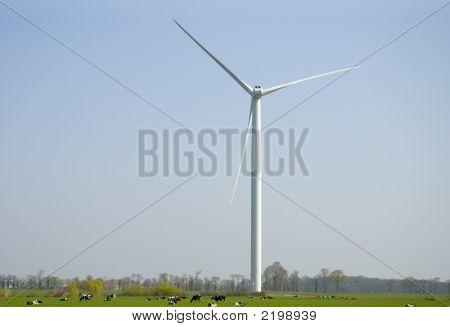 Cows Below Wind Turbine
