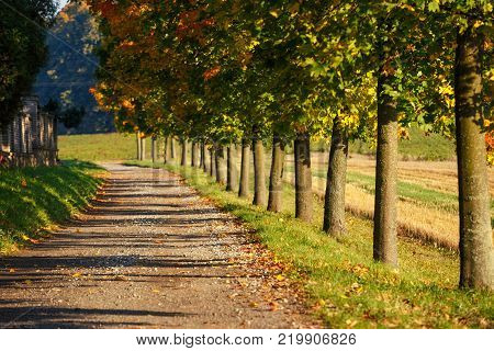 Pathway Lined With Autumn Trees - Maples