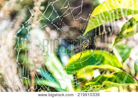 Macro closeup of black and yellow banded garden spider with web in green outdoors showing detail and texture