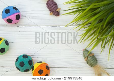 Pet care, veterinary, grooming concept. Pets having fun. A white wooden background with pet toy mice, colrful chewing rubber balls and green plant. Space for your text or image.