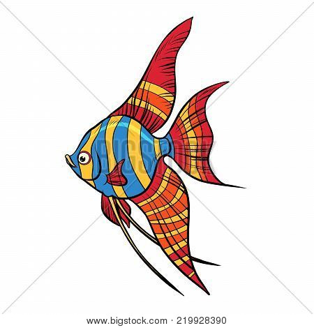 Freshwater angelfish aquarium fish. Isolated on white background. Pop art retro vector illustration