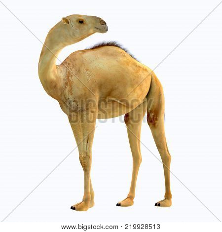 Camelops hesternus Side Profile 3D illustration - Camelops was a camel-type herbivorous animal that lived in North America during the Pleistocene Period.