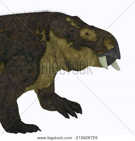 Placerias Dinosaur Head 3D illustration - Placerias was a herbivorous dicynodont dinosaur that lived in Arizona, USA in the Triassic Period.