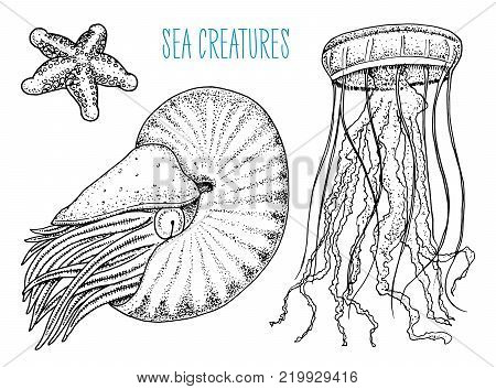 sea creature nautilus pompilius, jellyfish and starfish. shellfish or mollusk or clam. engraved hand drawn in old sketch, vintage style. nautical or marine, monster or food. animals in the ocean