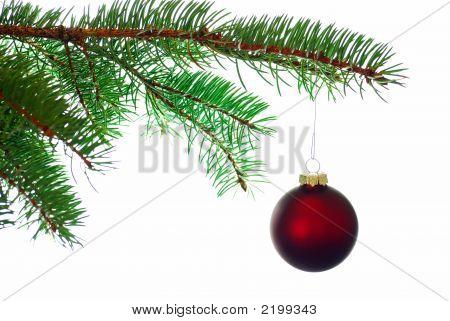 Bola Navidad roja sobre una rama