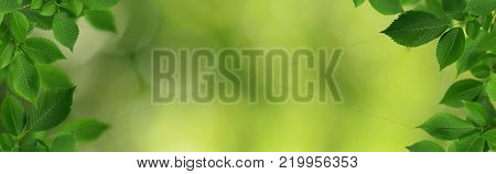 Decorative borders with fresh green elm-tree leaves on green bokeh background.