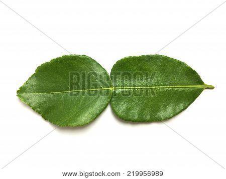 Fresh Green Kaffir Lime Leaves On White Background
