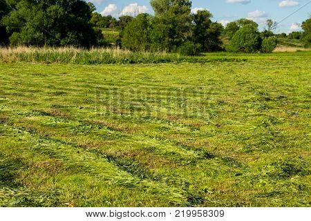 Freshly Mowed Meadow With Rows Of Hay