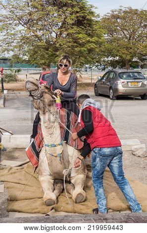 Yeriho, Israel, November 25, 2017 : The camel driver helps the visitor to sit on a camel in Yeriho in Israel
