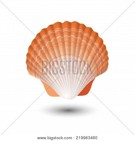 Seashell. Sea shell in vector. Seashell logo