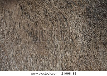 Skin Of A Wild Animal
