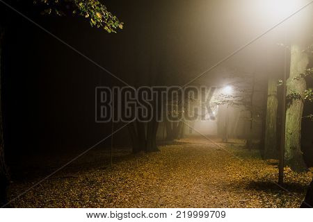 People Motion Blur In The Park, Night And Heavy Fog