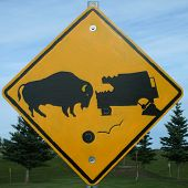 Sign warning of the impending dangers of hitting a buffalo poster