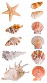 Seashells collection isolated on white background. Each element has a 8 Mp resolution poster