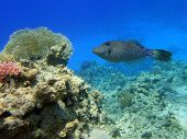 Interest fish in Red sea Sharm El Sheikh Egypt poster