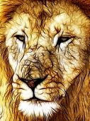 Close-up picture illustration of Large Lion face poster