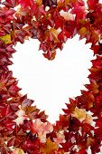 vine leaves frame on white background heart poster