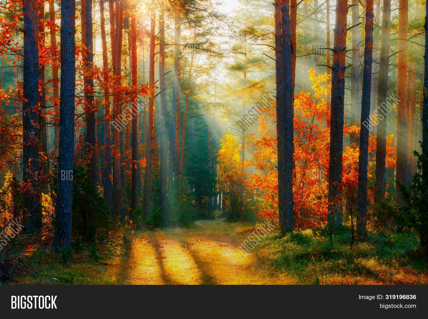Autumn Forest Image Photo Free Trial Bigstock