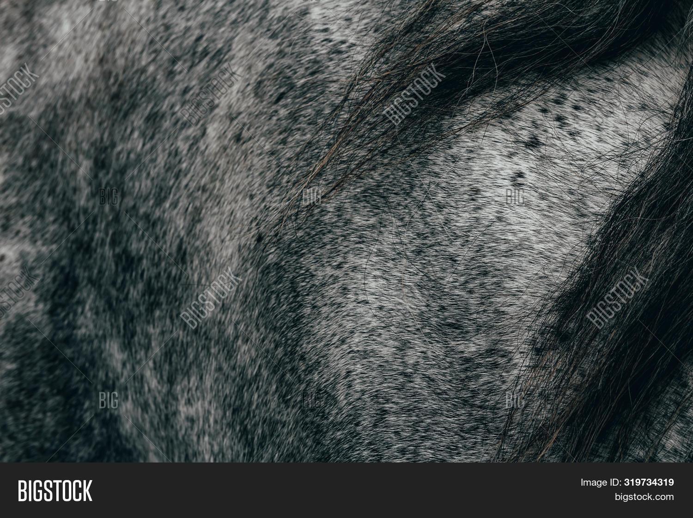 Nice Texture Roan Grey Image Photo Free Trial Bigstock