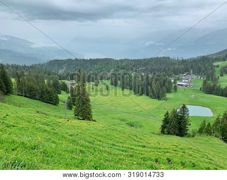 Green rolling hills with trees in Switzerland