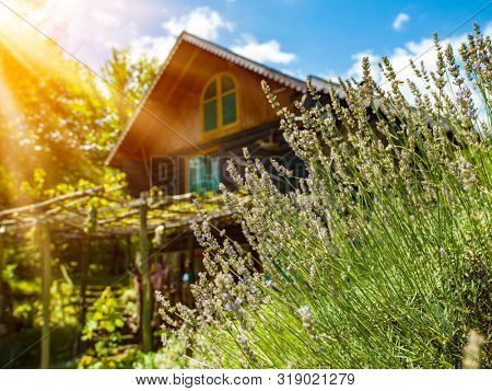 luxury family wooden  cotage house in forest with garden and colorful herbs