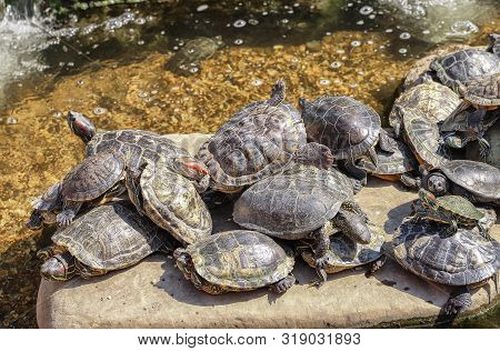 When There Is Not Enough Space On The Beach. Turtle Beach
