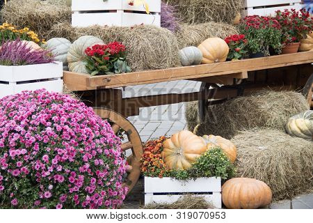 Orange Pumpkins On Hay, Old Rustic Cart. Autumn Street Decoration. Rural Market Atmosphere Concept.