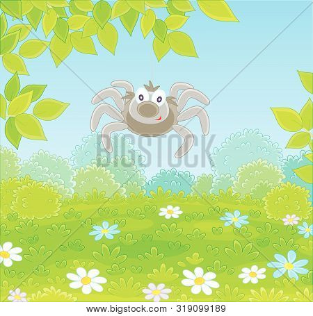 Funny And Friendly Smiling Grey Spider Hanging On A Tree Branch Over Green Grass Of A Glade In A Sum