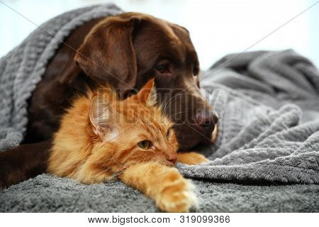 Adorable Cat And Dog Lying Under Plaid On Floor. Warm And Cozy Winter