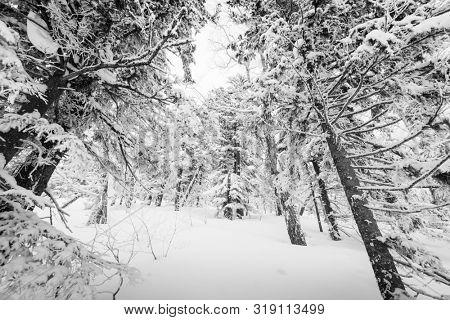 Mt. Kurodake  Hokkaido, Japan wintery hiking trail in monochrome.
