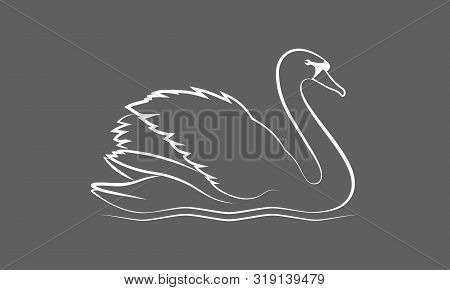 Swan Graphic Icon. Swan On The Water Sign Isolated On Gray Background. Vector Illustration