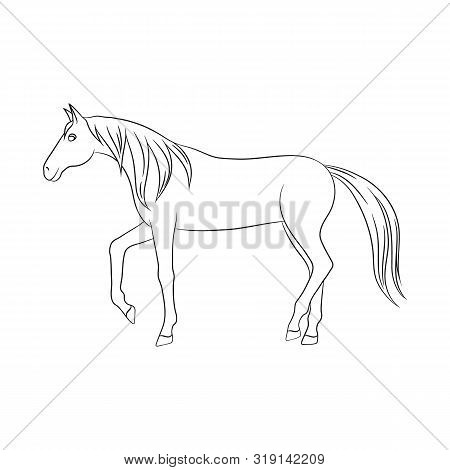 Vector Illustration Of Horse And Steed Icon. Collection Of Horse And Western Stock Symbol For Web.