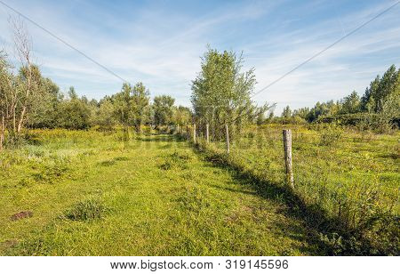 Fence Of Wooden Posts And Barbed Wire In A Dutch Nature Reserve Near Vuren, Gelderland. Behind The F