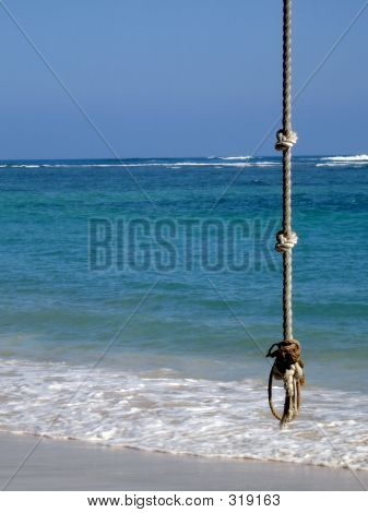 Rope Swing In Paradise