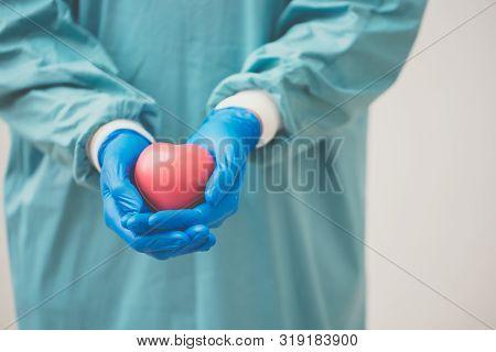 Surgeon Holding A Heart.anatomy Human Heart Model.