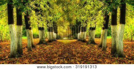 Autumn landscape with bright autumn trees and yellow fallen autumn leaves. Autumn alley in the city park, panoramic autumn view. Autumn panorama
