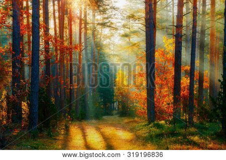 Autumn Forest Landscape. Fall Nature Background. Forest With Sunlight. Path Through Autumn Trees Ill