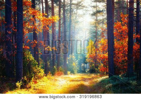 Autumn. Fall Forest Landscape. Autumn Nature. Forest Sunlight. Sun Shines Through Trees On Path In P