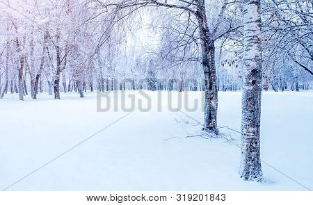 Winter Christmas landscape - snowy trees in winter forest in early morning. Winter Christmas landscape with forest trees. Tranquil winter nature in cold morning sunlight