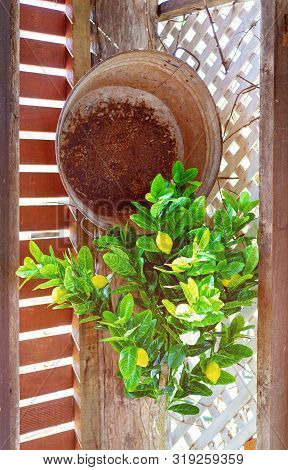 An Old Rusted Tub And An Artificial Lemon Tree In The Sunlit Corner Of A Quaint Retro Country Cafe